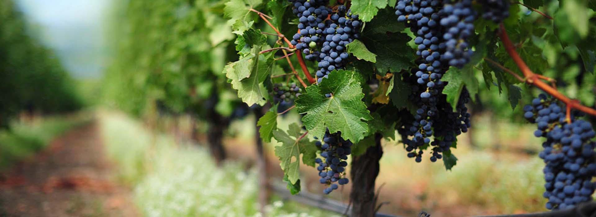 le due torri italian winery